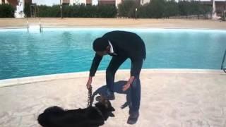 مدرب كلاب محترف 2