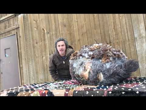 Xxx Mp4 Bigfoot Head Frozen Since 1953 Only Proof In Existence Of Sasquatch 3gp Sex