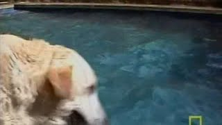 Dog Whisper season 2