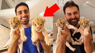 TOO CUTE! 2 BABY LIONS RESCUED ft. Mo Vlogs
