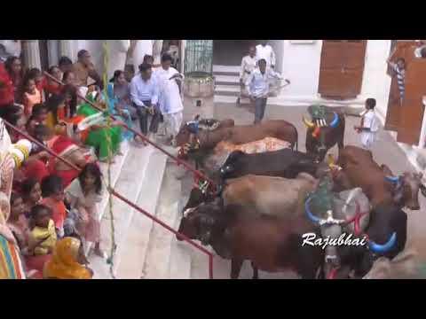 Xxx Mp4 Dwitiy Pith Shri Vitthlnathji Mandir Dipawali Mahotsav 2018 3gp Sex