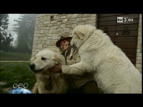 Documentario Middle Island Maremma project Rai 3 GEO&GEO Maremmani Abruzzesi di Jacopone da Todi