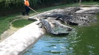 حديقة التماسيح في لنكاوي ( ماليزيا)