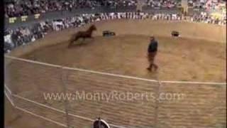 Monty Roberts and Lauki, Icelandic horse