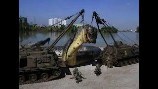 Capturada la serpiente mas grande del mundo - A Giant Snake- Anaconda - RADIO MIX HN