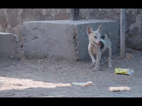 Xxx Mp4 All We Need Is Love Documentary On Indian Stray Dogs SOS 3gp Sex