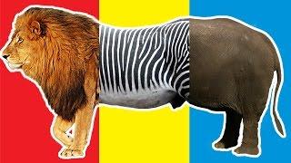 "Baby play ""Animals Match Up"" Learn Animal Names Real Lion Zebra Elephant Rhinoceros at Safari World"