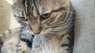 日曜日のベンガル猫ピーター君ときじとらミッキー君