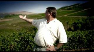 Durbanville Hills Harvest Report