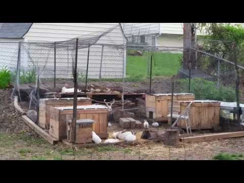 The View from the Kitchen Window - Meat Rabbit Colony (S.1-E.22.5)