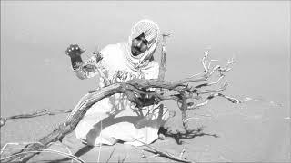 شجرة طلح عملاقة  ترمى في الرصاص وتحرق وهي حية