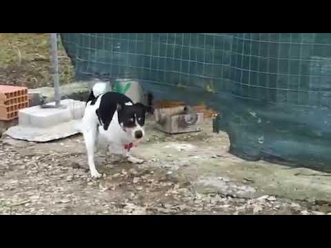 Xxx Mp4 Dog Fuck Chicken In Ass 3gp Sex