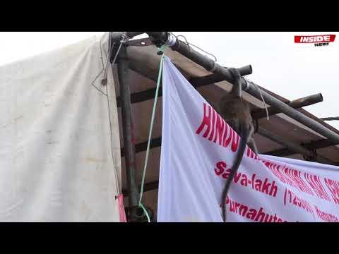 Xxx Mp4 Ganga Talao Des Dévots éblouis Par Un «spectacle» Offert Par De Singes 3gp Sex
