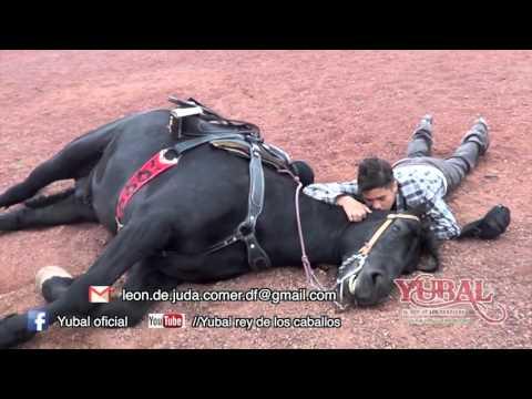 Yubal el rey de los caballos BACKSTAGE 2016