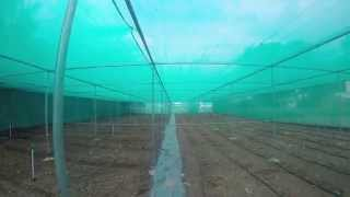 organic farming with green house setup