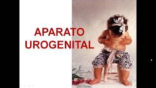 UROGENITAL1