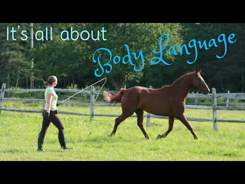 Xxx Mp4 How To Free Lunge A Horse At Liberty 3gp Sex