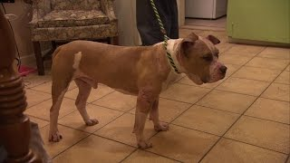 Sweet Blind Dog Familiarizes Himself with New Surroundings