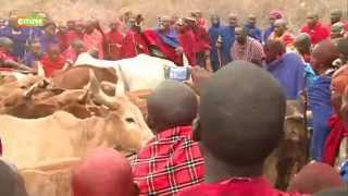 Maasai holy cow ceremony