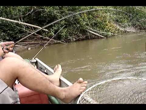 Pescaria de Piauçus