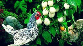 দেখুন, গাছে ধরছে হাসের আর মুরগীর ডিম | Bangla News