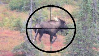 20 BEST SLOW-MO HUNTING KILL SHOTS - Stuck N The Rut Compilation