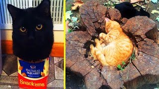"""Cats Said """"If I Fits, I Sits"""" And Proved Themselves Right 「 funny photos 」"""