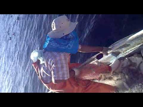 pesca de camaron golfo de santa clara