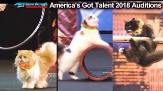 AMAZING CATS ACT Marina Savitsky Cats America