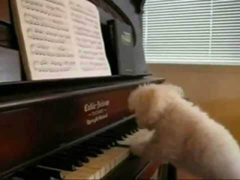 Happy Birthday, Tango Style! starring the Keyboard Dogs of Youtube mp3