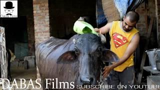 भैंस की चोरी 😂😍😍😍 | DABAS FILMS