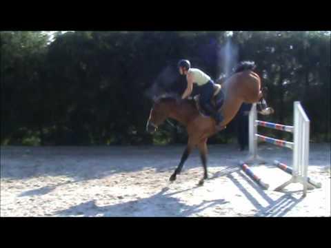 Xxx Mp4 Caretino Xx Carthago 5y Horse For SALE 3gp Sex