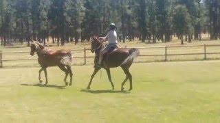 Tandem Horseback Riding/Driving