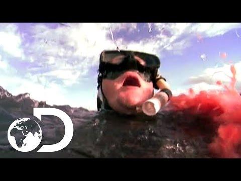 Eaten Alive Shark Sneak Attack