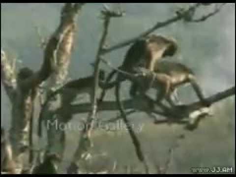 Xxx Mp4 Very Fynny Monkey Sex Video Very Funny Funny Animal 3gp Sex