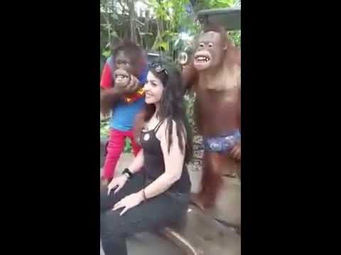 Sexy Girl VS Monkey Very Hot