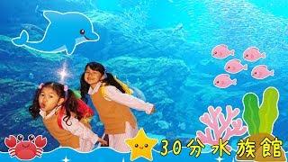 閉館30分前!超弾丸ツアーで水族館をまわる!!仙台うみの杜水族館☆himawari-CH