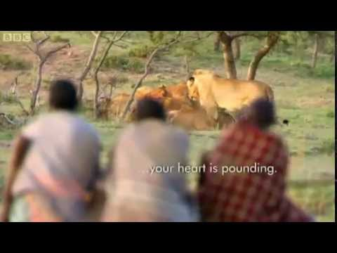 Xxx Mp4 3 African Men Stealing 15 Lion 39 S Food Without A Fight 3gp Sex