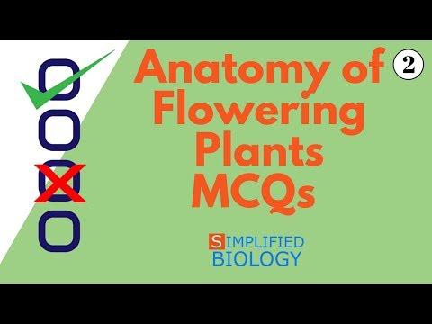 ANATOMY OF FLOWERING PLANTS MCQs 2 for NEET AIIMS AIPMT JIPMER PREMED