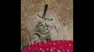 Funny cat videos / The cat is watching over the ambush