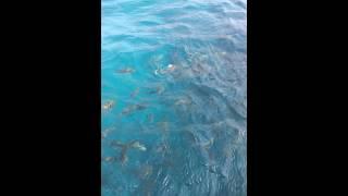 رحلة بحرية وزيارة منطقة أسماك بمدينة ينبع الصناعية