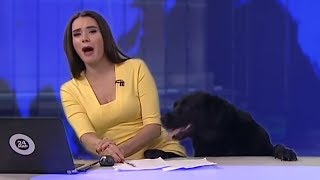 Dog Jumps on Table During the Air