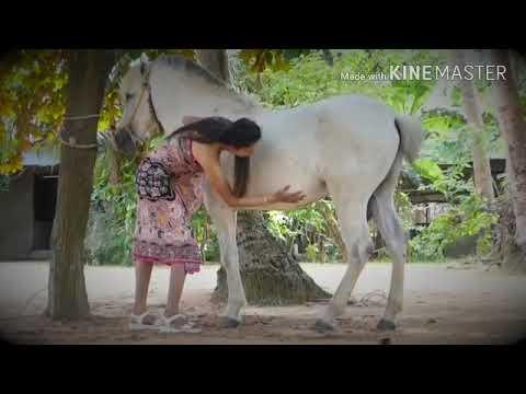 Xxx Mp4 पागल लड़की देखो घोड़े Xxxxxxxx 3gp Sex