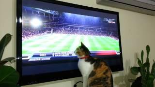 Maç izleyen Kedi :)