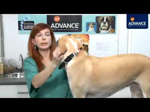 Perros Señales de enfermedad