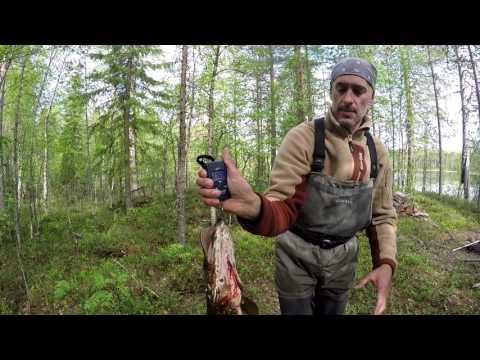 шуезеро отчет о рыбалке