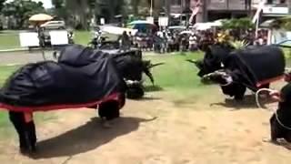 Kesenian Jaran Kepang Bantengan Turonggo Putro Singo Joyo BERINGIN WAJAK ~ Asli Budaya Indonesia
