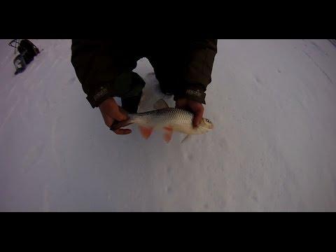 ловля голавля на червя видео