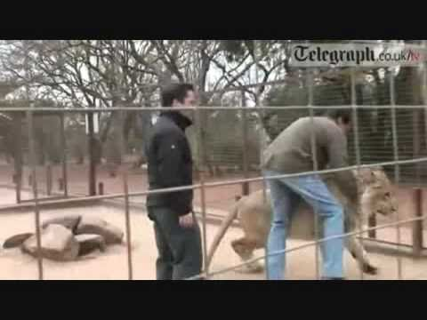Top 10 Lion attacks on human by odissey505