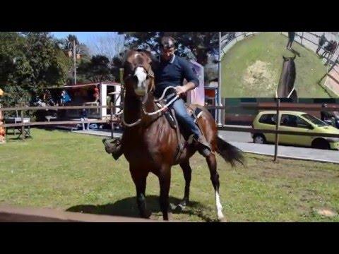 Xxx Mp4 Keoma Stallion Rappresentation On Easter Days GOPRO HERO3 NIKON D3200 3gp Sex